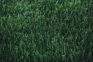 Affordable Artificial Turf